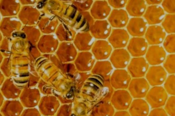 BeeSweet Honey