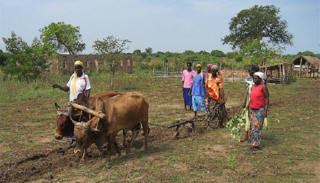 Ugandan Women Tilling the Land