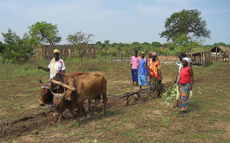 Ugandan Women Tilling the Land